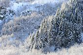 Winter Panorama With Snow Clad Forests