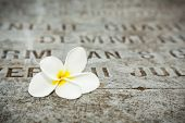 stock photo of deceased  - Picture of White Flower on tombstones in old cemetery Museum Prasasti Jakarta Indonesia - JPG