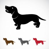 pic of dachshund  - Vector image of an dog  - JPG