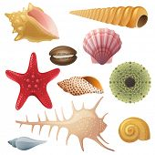image of cockle shell  - Bright highly detailed seashell icons - JPG
