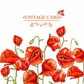 Bunch of Beautiful Red Poppy vector illustration