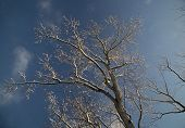 Snow-covered tree with blue sky