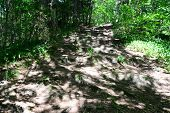 Passage in the forest with shadows. Sigulda.