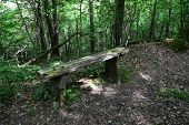 Old bench in the forest. Sigulda, nature