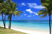stock photo of mauritius  - wonderful beach with palm trees in tropical island - JPG