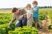 Father And Two Little Sibling Boys On Organic Strawberry Farm