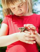 Little girl looking at true toad sitting on her hand