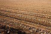 Freshly Ploughed Field