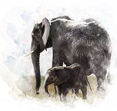 Watercolor Digital Painting Of Elephants