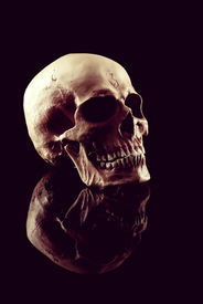 picture of cranium  - A Natural human skull on black background - JPG