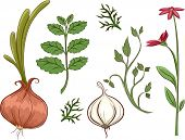 Illustration Featuring Different Types of Herbs