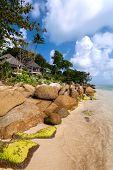 Coast, Palm Tree, House, Stones