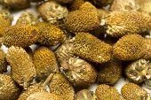 Splinthes Acemella or Yellow Akarkara Seeds