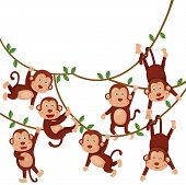 Illustration of monkeys funny cartoon