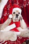 christmas dog wearing a santa hat