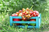 Fresh organic fruits in wooden box outdoors