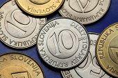 Coins of Slovenia. Slovenian 10 tolar coin.