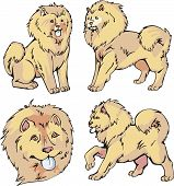 Chow-chow Dogs