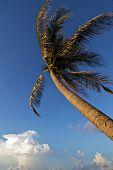 Wind Blown Palm