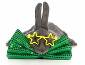 famous bunny wearing star glasses and green bow tie on white background