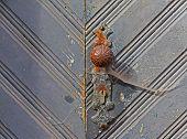 Iron Door Handle On An Old Wooden Door
