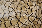 Dried Mud Cracks