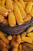 Corn in the basket