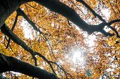 Colorful Yellow Autumn Leaves