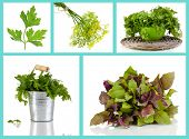 Fresh herbal collage