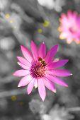 Purple flowers in field, closeup
