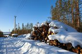 foto of deforestation  - Deforestation in the clearing of power line in a snowy forest - JPG