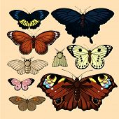stock photo of neutral  - Set of realistic images of beautiful butterflies and moths - JPG