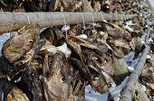 pic of lofoten  - Heads of cod hanging to dry - JPG
