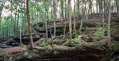pic of species  - Hocking Hills State Park in Logan - JPG