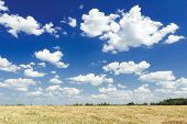 picture of goldenrod  - Cumulus on aero blue sky above harvested grain goldenrod yellow color straw field - JPG