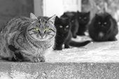 pic of black eyes  - Group of cats with green glowing eyes sitting and looking at camera - JPG
