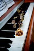 Dried rose on a piano