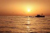 stock photo of catch fish  - Fisherboat professional sardine catch fishery sunrise backlight with seagulls flying - JPG