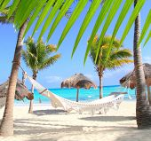 stock photo of mayan  - Caribbean beach hammock and palm trees in Mayan Riviera Mexico - JPG