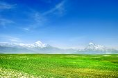 Meadow & Mountains Landscape