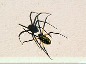 Spider And Its Shadow