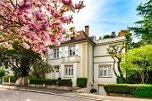 Classic French House In Residential District Of Strasbourg, Blossom Spring Time, Flowering And Garde poster