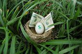 Nest Egg 3