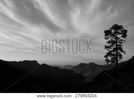 Mountain Landscape With Lonely Pine