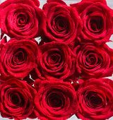 Collage Of Red Roses. Bouquet Of Fresh Roses, Flower Bright Background. A Close Up Macro Shot Of A R poster