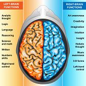 image of right brain  - Illustration body part - JPG