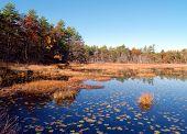 Forest Lake, Autumn