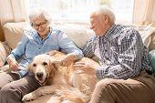 Portrait Of Happy Senior Couple With Dog Sitting On Couch Enjoying Family Weekend At Home In Retirem poster
