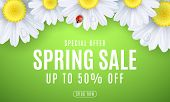 Spring Sale Banner. Ladybug Creeps On The Flowers. Realistic Daisies. Seasonal Design For Your Busin poster