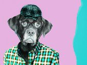 Old labrador retriever dog wearing eye glasses and a vintage pageboy cap. Contemporary art collage.  poster